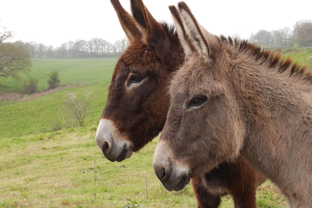Présentation de l'élevage d'ânes et de produits dérivés