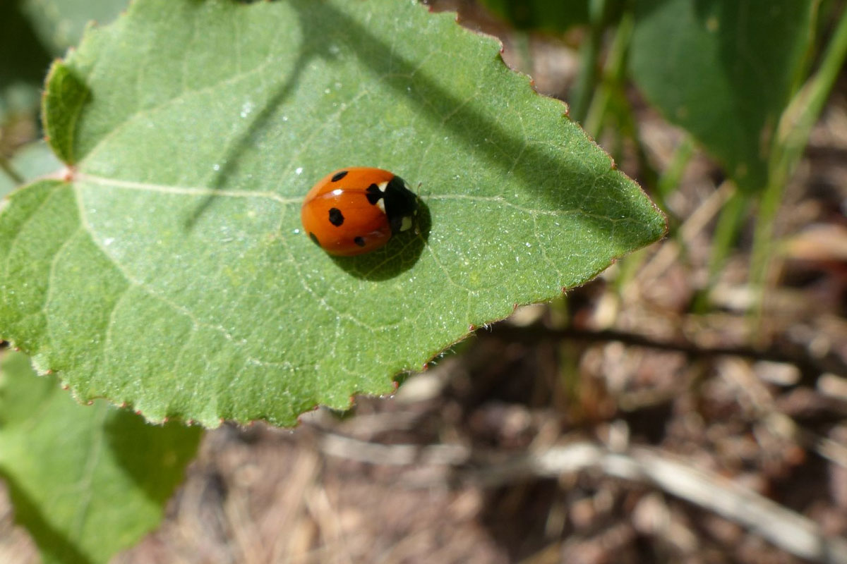 Balade découverte de la biodiversité